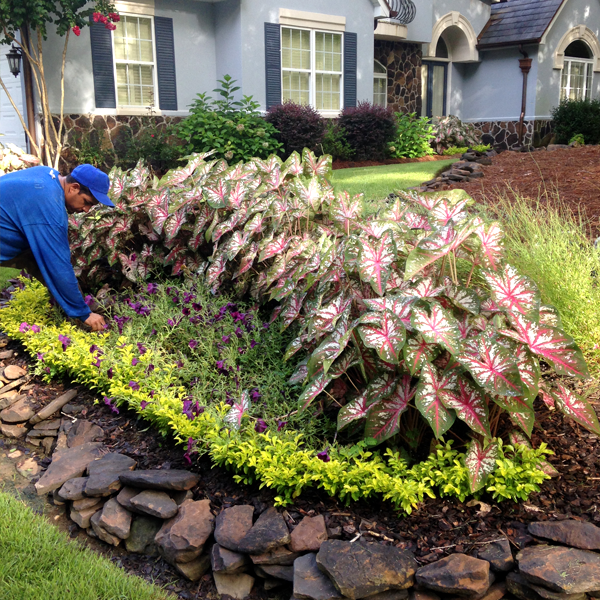 experience from just south of atlanta to warner robins we have been serving the middle georgia area since 2009 we are a full service landscape company